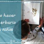 Cómo hacer un herbario con niños – Making a herbarium with kids