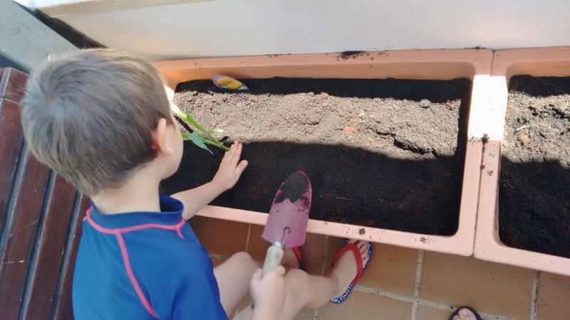 huerto urbano niños - montessori en casa