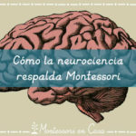 Cómo la neurociencia respalda Montessori – How neuroscience supports Montessori
