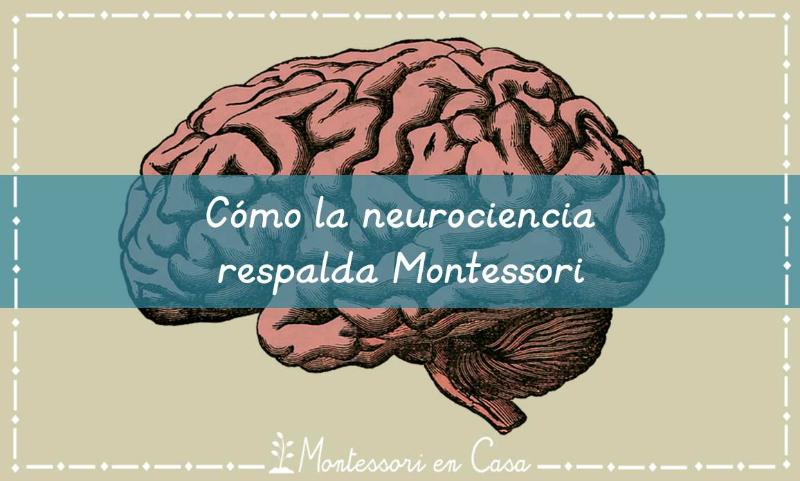 neurociencia-montessori