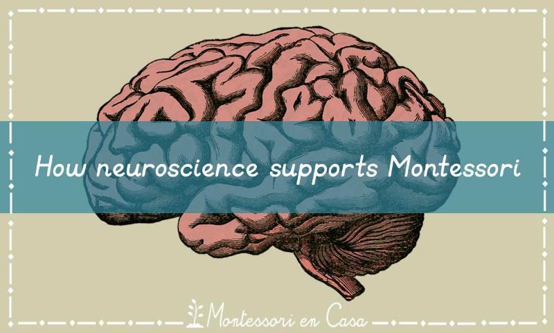 neuroscience-supports-montessori