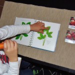 Botánica y lenguaje: frutas y verduras – Botany and language: fruits and vegetables