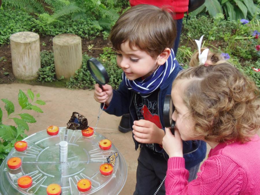 Mariposas - Montessori en Casa