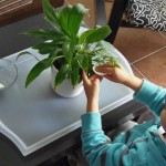 Cuidar plantas: Limpiar las hojas – Care of plants: Cleaning the leaves