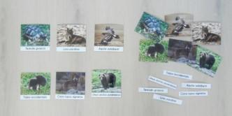 Tarjetas fauna Ibérica