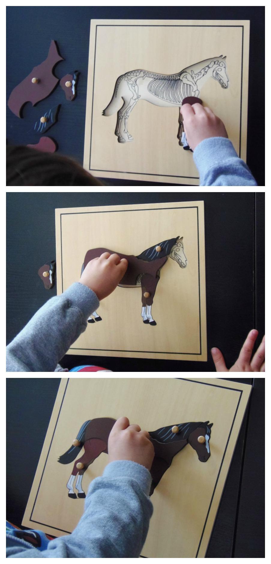 Puzzle caballo