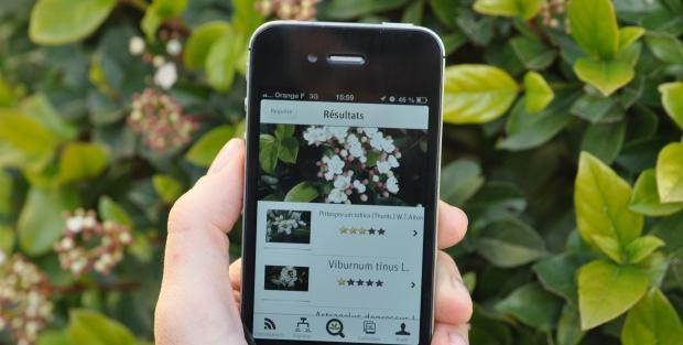 3 Apps gratuitas para la identificación de plantas - 3 Free Apps for plant identification