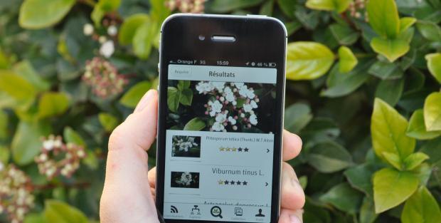 3 Apps Gratuitas Para La Identificación De Plantas 3 Free Apps For