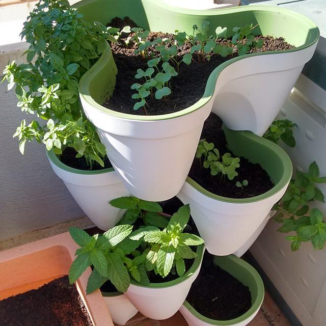 9 Plantas Ideales Para Un Huerto Urbano Con Niños