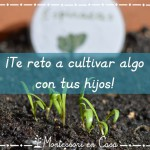¡Te reto a cultivar algo con tus niños! – I challenge you to grow something with your kids!
